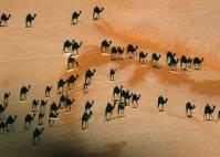steinmetz-camel-shadows-615